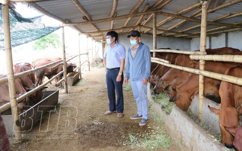 """Một ông nông dân tỉnh Thái Bình """"liều"""" khi bỏ ngành du lịch về quê chỉ để nuôi bò giống ngoại toàn con to bự"""