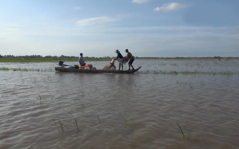 Đồng Tháp: Nước lũ về tràn đồng, nông dân phấn khởi