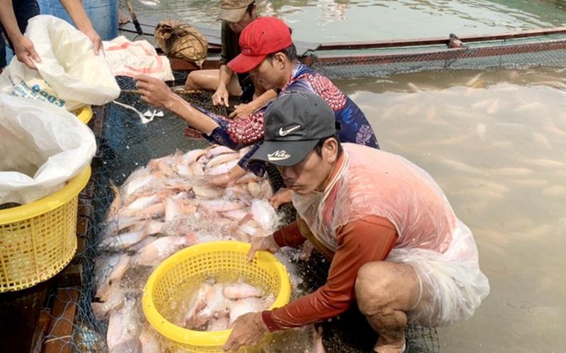 Đồng Nai: Nông dân nóng lòng chờ cấp một tờ giấy để đưa cá lên bờ