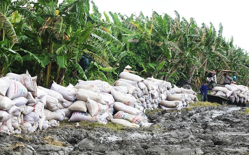 Cần Thơ: Nới lỏng giãn cách xã hội, gần 70.000 ha lúa thu đông có bán được không, nông dân lời hay lỗ?
