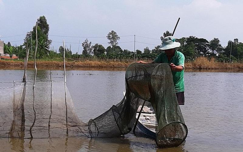Nước lũ đã tràn vô đồng ở tỉnh Đồng Tháp, An Giang rồi, cá linh, chuột đồng nhiều hay ít, bán giá bao nhiêu?