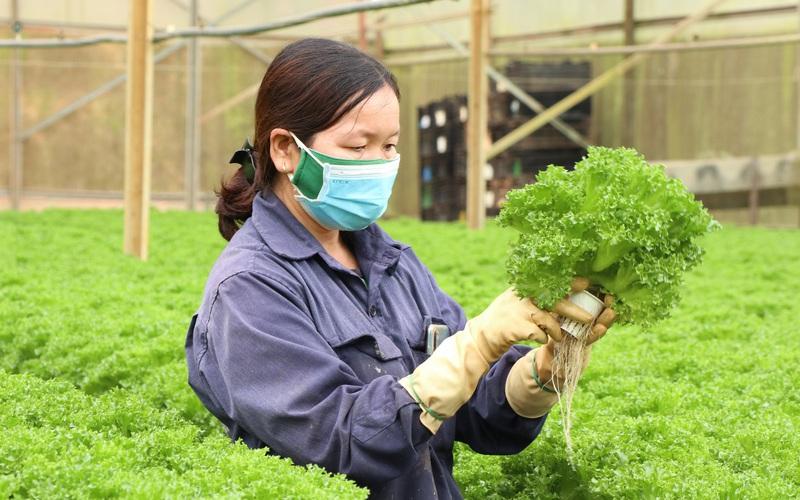 Chuyển đổi số trong nông nghiệp ở Lâm Đồng (bài 2):  Đa dạng các lĩnh vực ứng dụng
