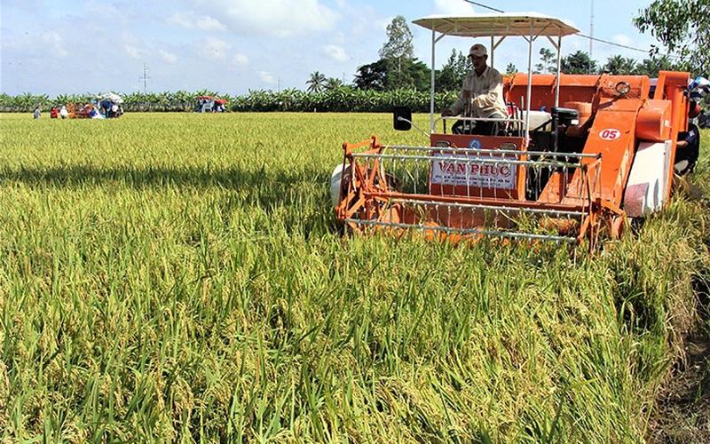 Sóc Trăng tạo điều kiện thuận lợi cho nông dân thu hoạch và tiêu thụ lúa