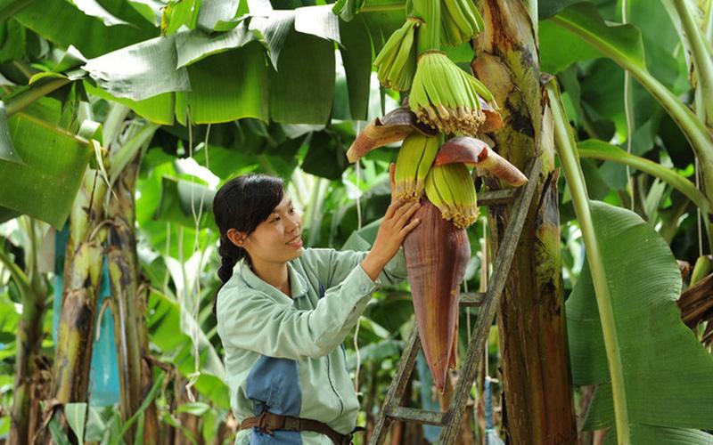 120 đầu mối ở Đồng Nai giúp nông dân tiêu thụ hàng trăm tấn nông sản