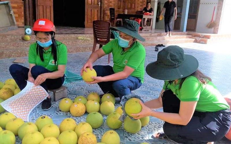 """Hội Nông dân Hà Tĩnh giúp nông dân """"giải phóng"""" gần 90 tấn bưởi Phúc Trạch"""