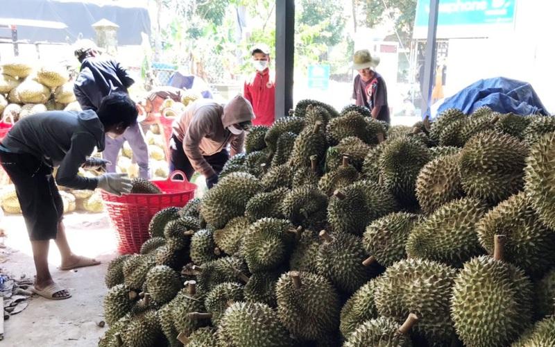 Dịch Covid-19 kéo dài, nông dân tỉnh Khánh Hòa vẫn bán hết sạch đặc sản sầu riêng