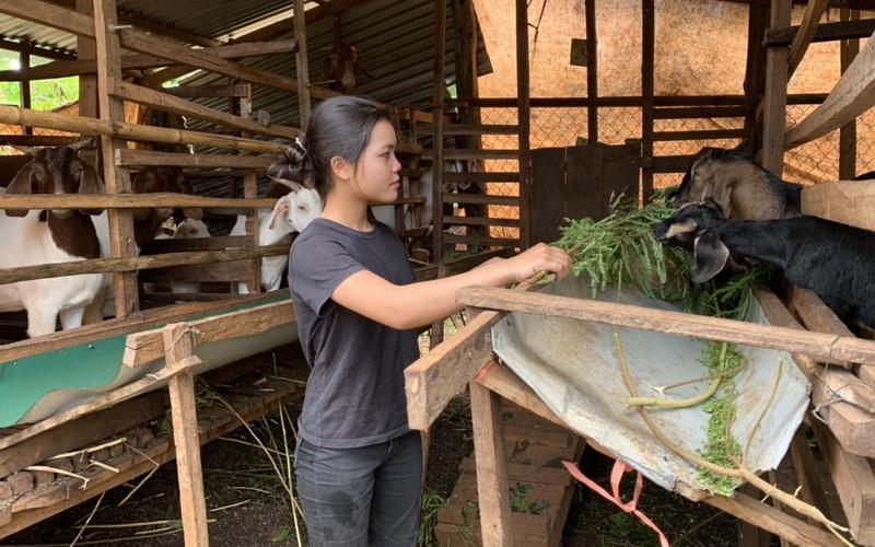 Giải ngân vốn vay Quỹ HTND nhanh, giảm phí mạnh cho nông dân