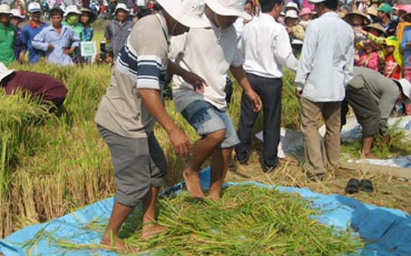 Lễ hội ngày mùa trên cánh đồng mẫu lớn