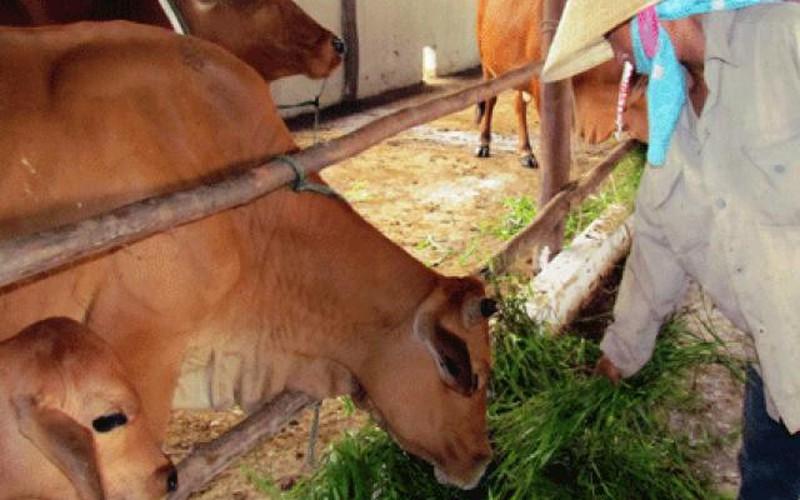Hà Tĩnh: Giúp nông dân chuyển từ manh mún sang làm ăn lớn