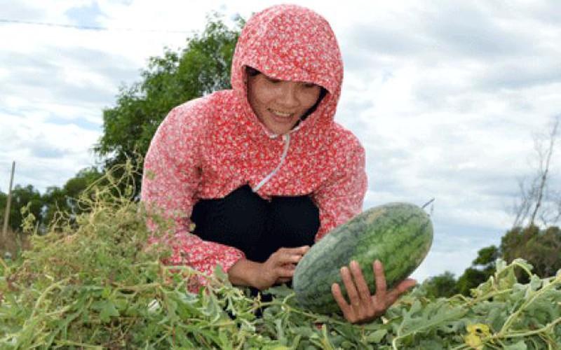 Nông dân trẻ tiên phong trồng rau an toàn