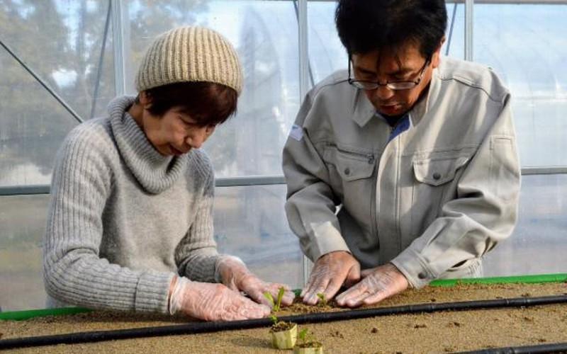 Người già 70 tuổi ở Nhật vẫn làm được nông nghiệp nhờ công nghệ IoT