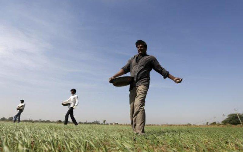 Nhà nông Ấn Độ trông chờ ở startup công nghệ