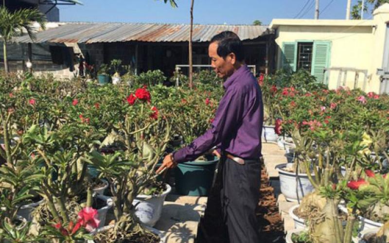 Cây chưng tết Mậu Tuất 2018: Nét đẹp hoa sứ ghép Thái Lan