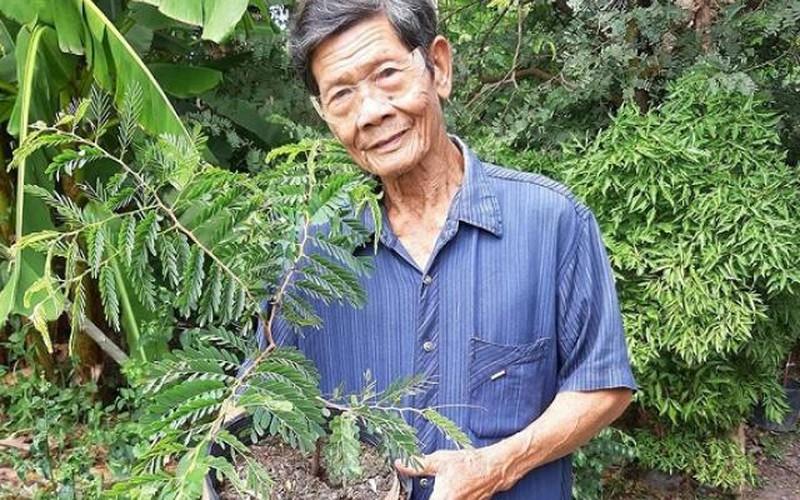 An Giang: Trồng me Thái, thu vài tấn trái, bán tới 70.000 đồng/ký