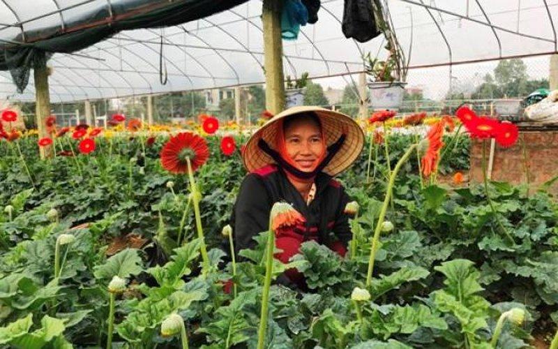 ẢNH: Lạc vào làng hoa Tết xứ Thanh có những bông đồng tiền to tướng