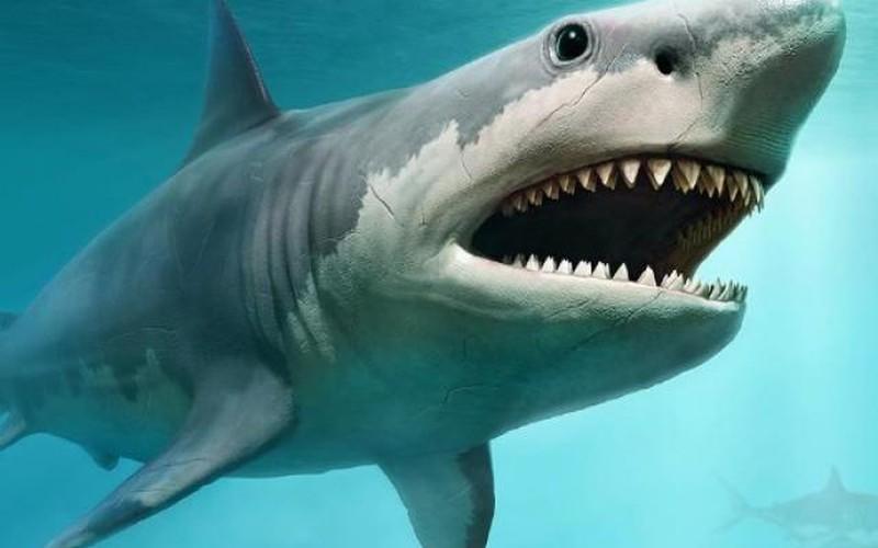 Nguyên nhân cá mập quái vật thời tiền sử nặng gấp 5 xe buýt tuyệt chủng