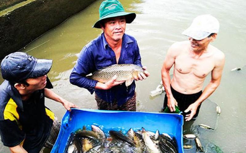 """""""Biến"""" cá chép thường thành cá chép giòn, bán 130-150 ngàn/kg"""