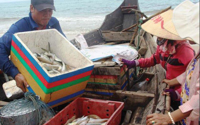 Đầu năm dân ra biển bắt toàn cá ngon, có loại cá bán 200 ngàn/ký