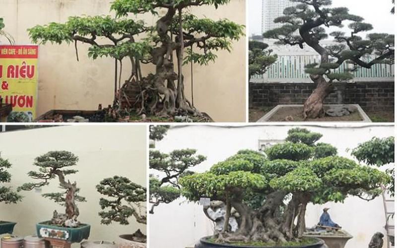 """Khu vườn """"khủng"""" tiền tỷ của đại gia kỳ lạ, bán cả nhà Hà Nội để mua cây cảnh"""