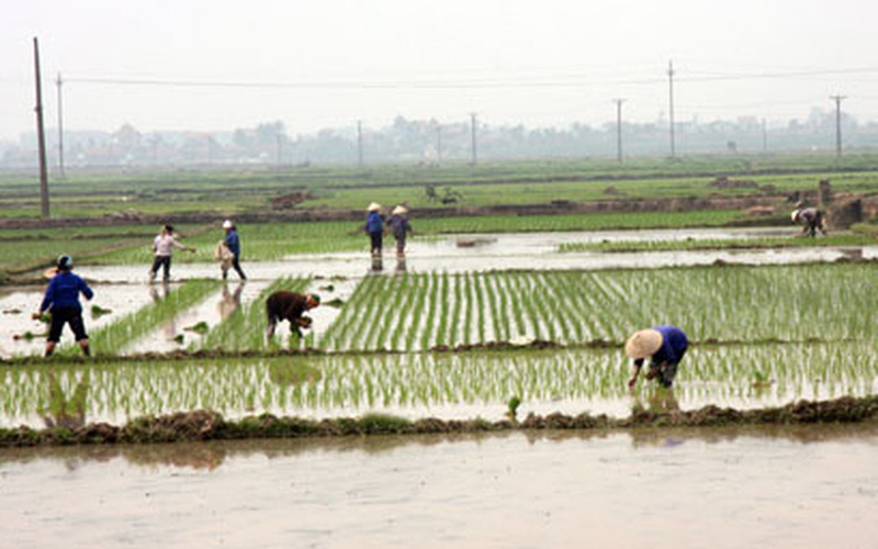 Hà Nội: Dồn điền đổi thửa đạt 95,90% kế hoạch