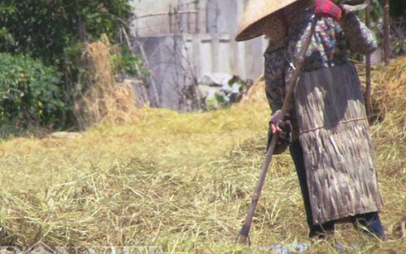 Muôn kiểu chống nóng trong mùa gặt của nông dân Hà Tĩnh