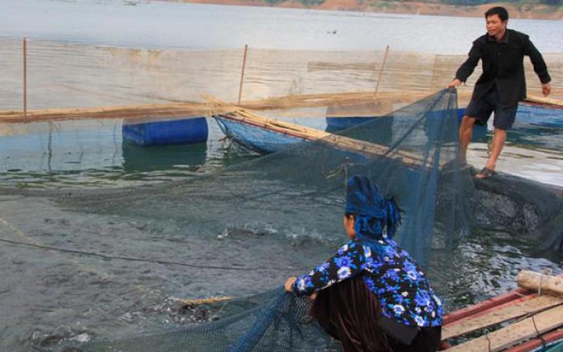 Dưới nuôi cá lồng, trên thả vịt trời bay có ngay 1 tỷ đồng