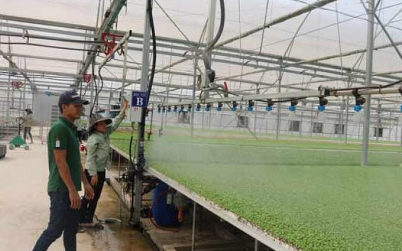 Choáng ngợp ở vườn rau triệu đô, rộng 80ha, thu hoạch 10 tấn/ngày
