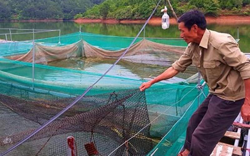 Lãi 100 triệu/năm nhờ làm ao, chăng lưới làm lồng thả cá