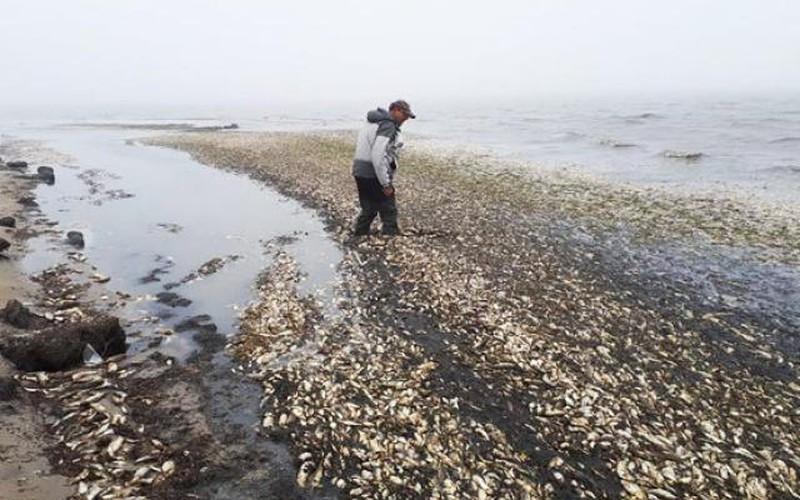 Kinh hoàng 100 tấn cá chết trắng bờ biển khiến nhiều người sợ hãi