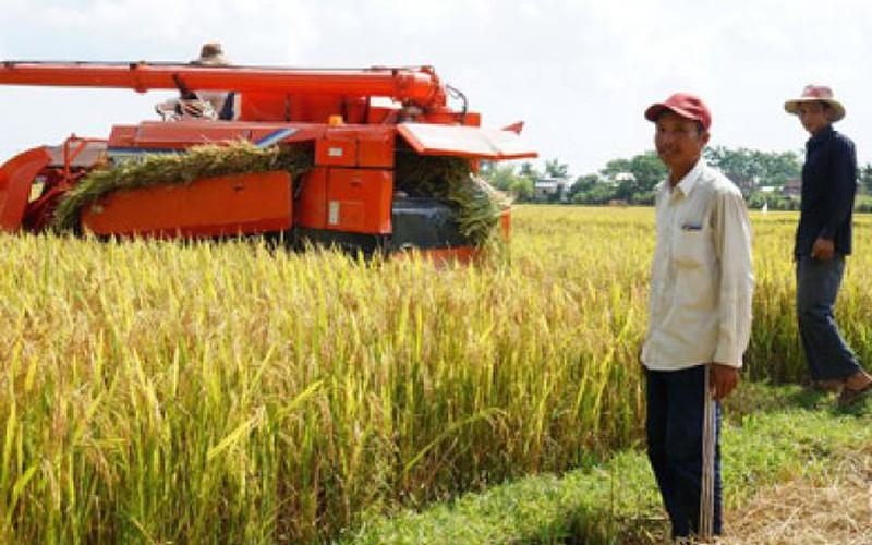 Quảng Nam sẽ có những nông trường triệu đô