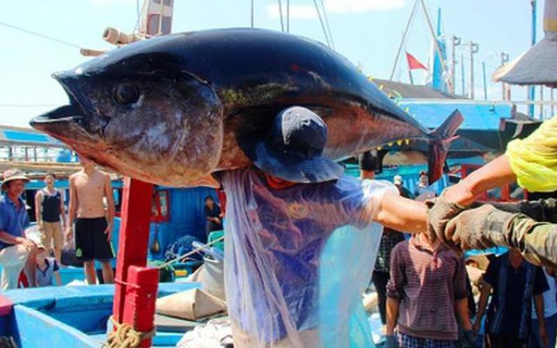 Vụ ách tắc 5.400 tấn thủy sản: Không có lợi ích nhóm chi phối