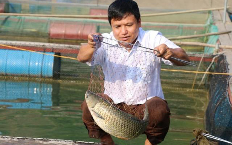 Từ núi xuống sông Đà nuôi cá đặc sản mà khấm khá hẳn lên