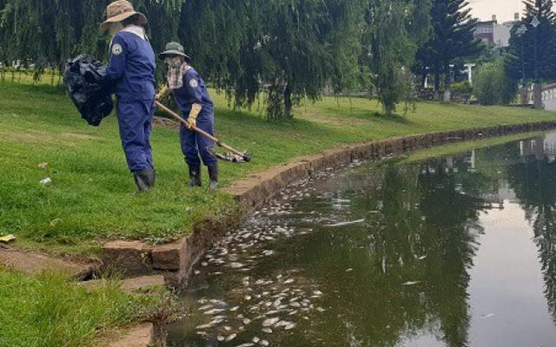 Lâm Đồng: Cá chết trắng hồ Bảo Lộc, mỗi ngày vớt vài chục kg
