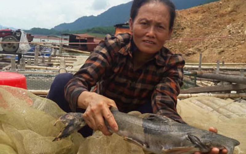 """Nuôi cá """"ma"""" đỏng đảnh trên sông Đà, mau hốt bạc mà cũng dễ trắng tay"""
