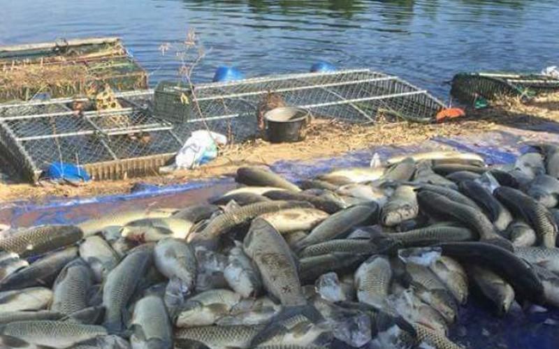 Hàng chục tấn cá lồng chết hàng loạt, dân tố do thủy điện giữ nước