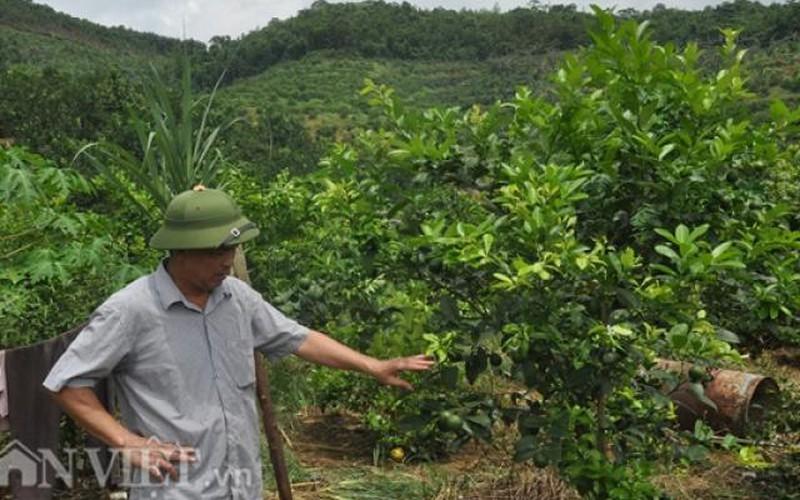 Đại gia chân đất ở Yên Bái và trang trại 300ha, doanh thu 30 tỷ/năm