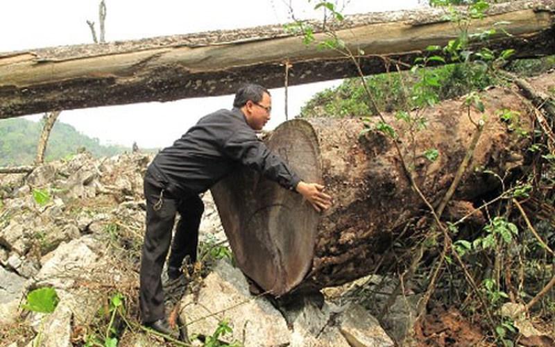 Huyện Sông Mã (Sơn La): Xử phạt gần 200 vụ xâm lấn rừng