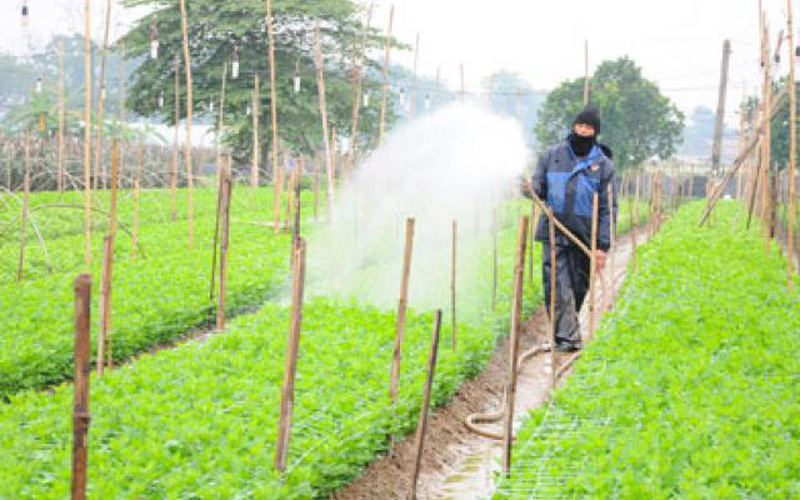 Nông dân Hà Nội: Sáng gặt lúa, chiều xuống ruộng trồng cây vụ đông