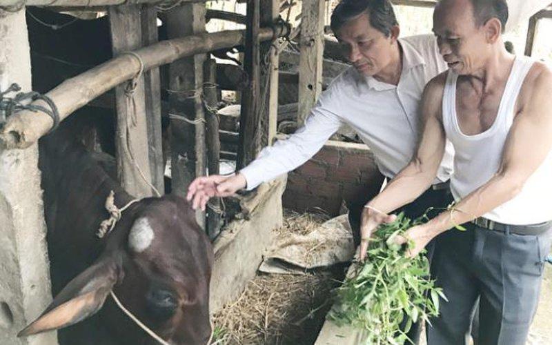 Quảng Ngãi: Kiểm tra khẩn việc cán bộ xã thu tiền bò giống cấp miễn phí