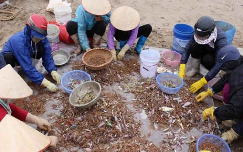 Ngư dân Hải Triều trúng đậm 'lộc biển' thu tiền triệu/chuyến ra khơi