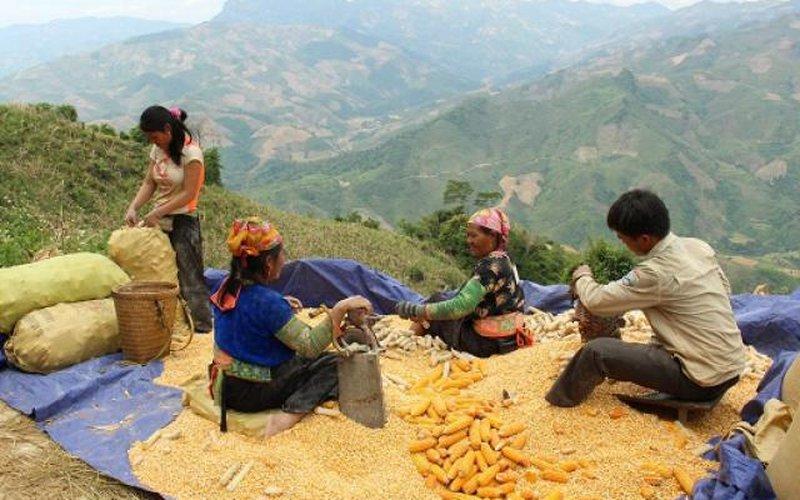 Sơn La: Ở xã vùng cao mỗi người có nghìn m2 đất sản xuất vẫn nghèo