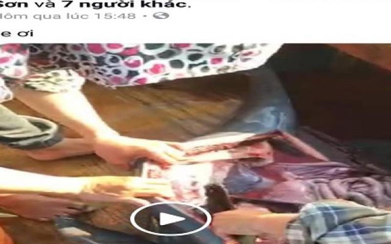 Dân mạng phẫn nộ với nhóm người livestream cảnh giết cá heo