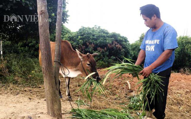 Lý do 5 hộ dân ở Kon Tum viết đơn xin thoát nghèo