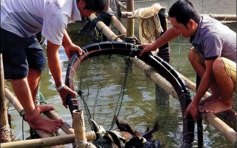 """Ở đây dân nuôi toàn cá đặc sản, """"găm hàng"""" giáp Tết bán cho đắt"""